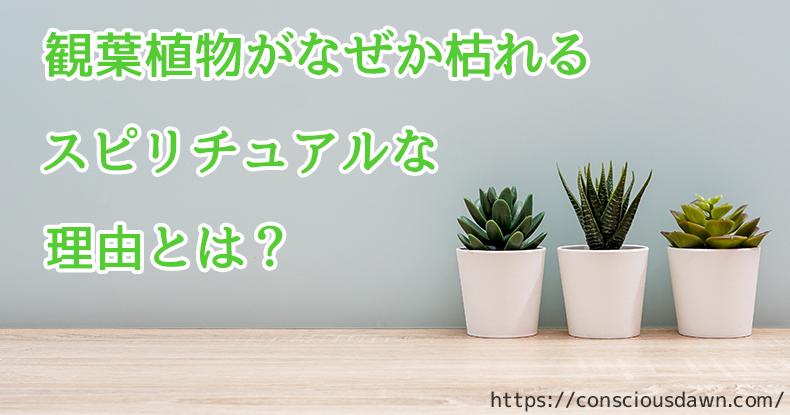 観葉植物がなぜか枯れる理由