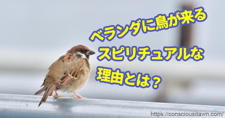 ベランダに鳥が来るスピリチュアルな理由とは?